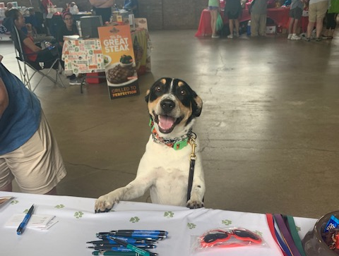 We Had a Fantastic Time at the Lake Co Pet Expo!